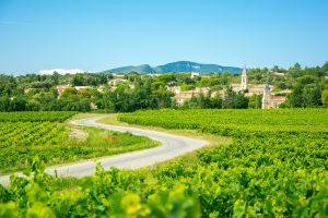œnologie sur les routes des vins